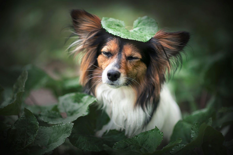 Hund mit Blatt am Kopf_Hundefotoshooting Angebot