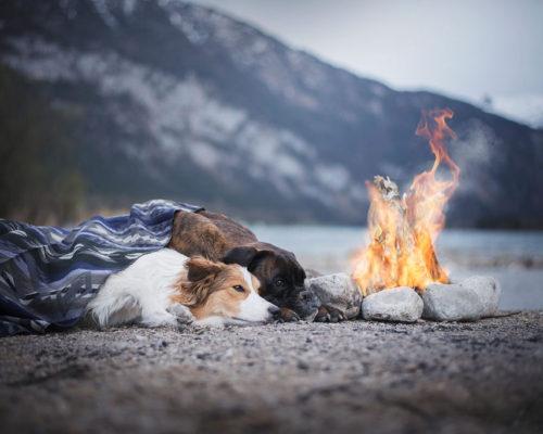 Zwei Hunde liegen am Lagerfeuer und genießen die Ruhe_Hundefotografie-Österreich
