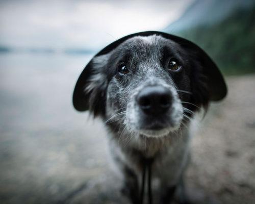 Hunde mit Hut am See_Hundefotoshooting-Oberösterreich