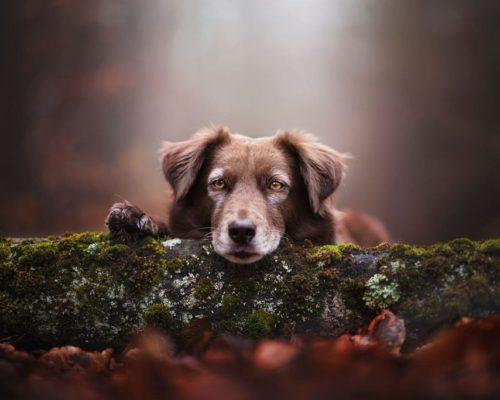 Hundefotoshooting in Österreich zu jeder Jahreszeit