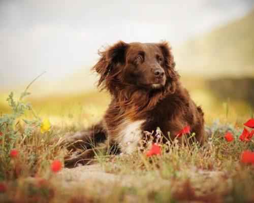 Hundefotoshooting in Korsika mit Hündin Cindy