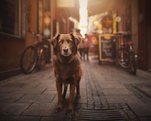 Hundefotoshooting in Graz mit Finn_Hundefotografien portraitiert ihren Hund in Graz