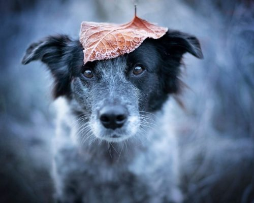 Hundfotoshooitng mit lustigen Ideen