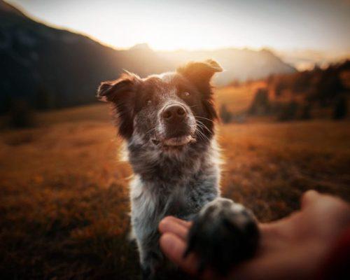 Fotoshooting mit Hund in den Bergen von Südtirol