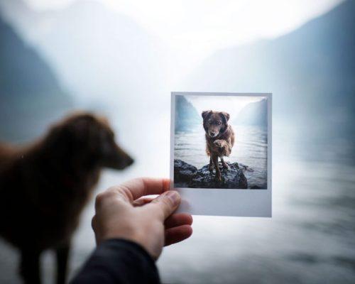 Hundefotografin hält Momente auf ganz besondere Art und Weise fest