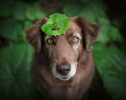 Hundefotografin setzt Hund mit Schnecke in Szene