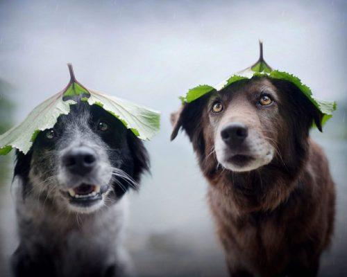 Hundefotshooting mit ausgefallenen Ideen_Hunde posieren mit Blatt am Kopf für die Fotografin
