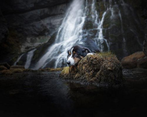 Australian-Shepher-am-Wasserfall_Hundefotograf-Österreich