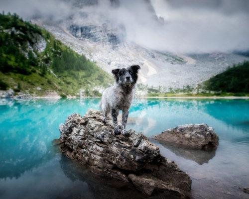 Yuri-Lago-di-Sorapis_Hundefotoshooting-in-den-Bergen