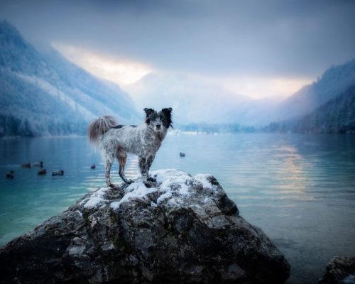 Yuri-Langbathsee_Hundefotoshooting-im-Winter