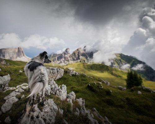 Yuri-Südtirol_Hundefotografin-Anne-Geier