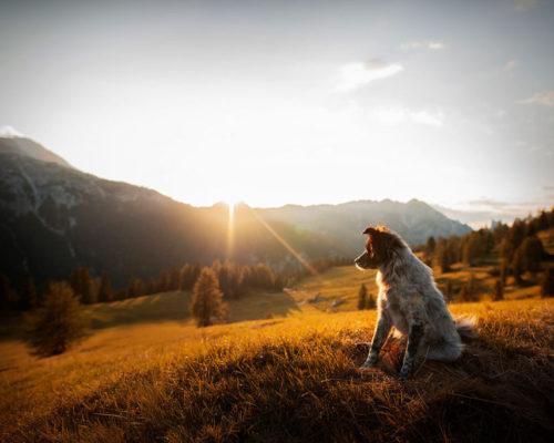 Yuri-Sonnenuntergang-Dolomiten_Hundefotoshooting