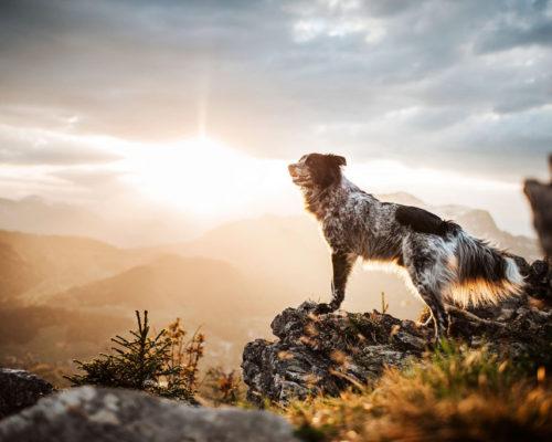 Yuri-Sonnenuntergang_Hundefotoshooting_Österreich